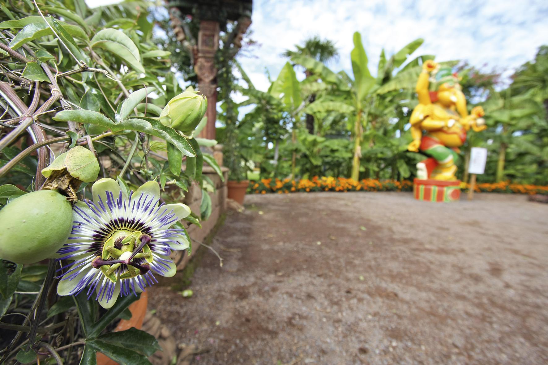 Die Blumengärten von Hirschstetten