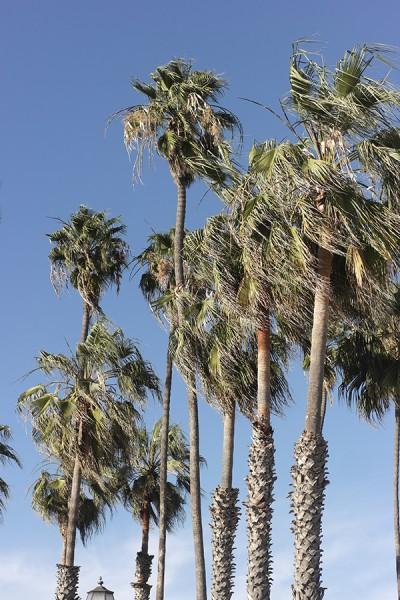 palmen santa barbara