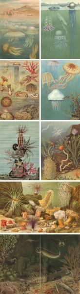 Fische Ilustrationen